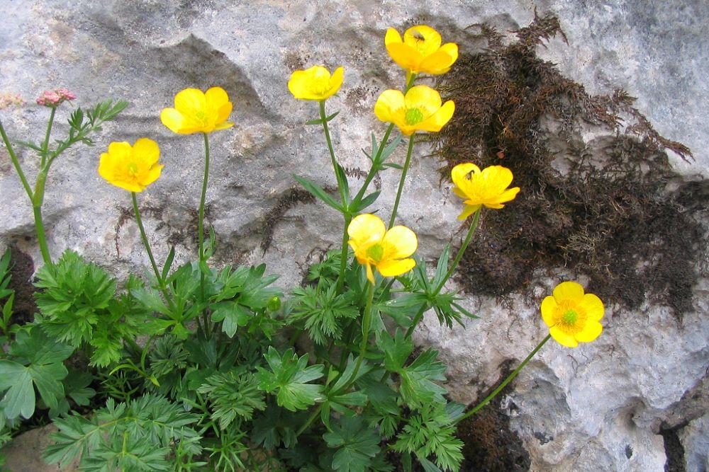 Wildblumen auf Wanderungen